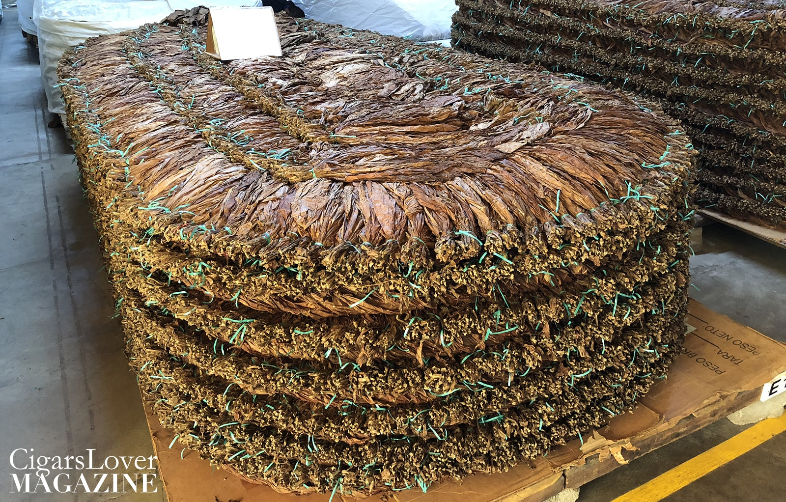 pilon - tobacco